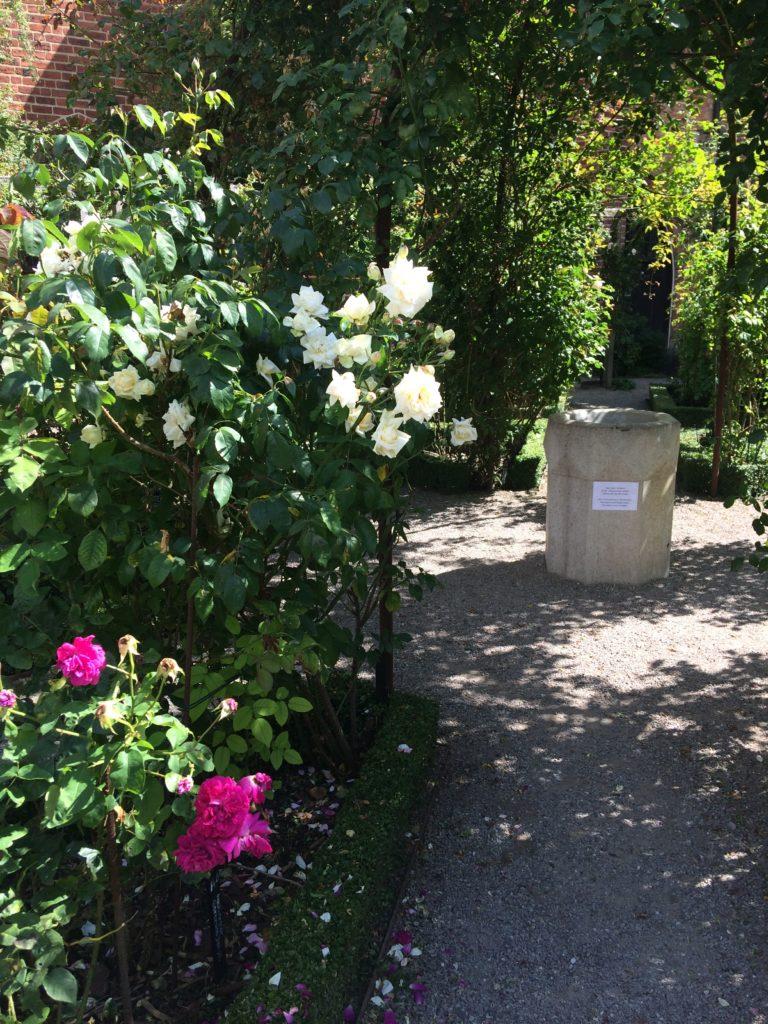 Der Klostergarten in Ystad. Foto: Mirja Dahlmann