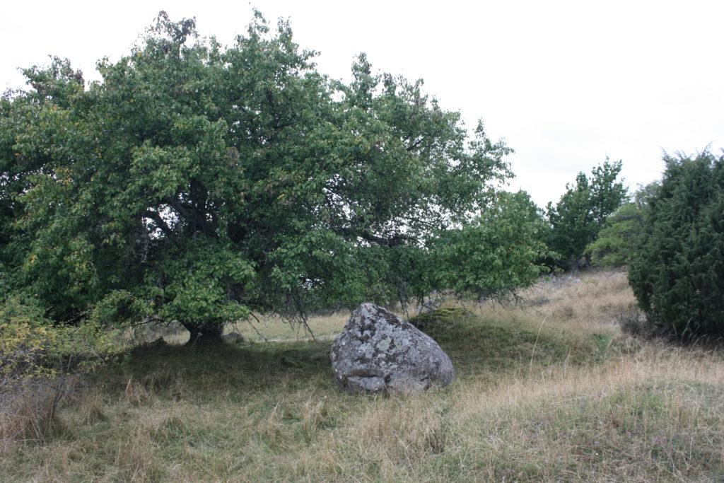 Landschaft Birka Mälaren