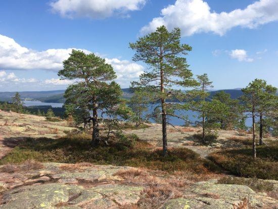 Die Hohe Küste – Weltnaturerbe an der Ostsee